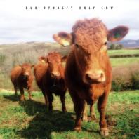 Dub Dynasty - Holy Cow CD